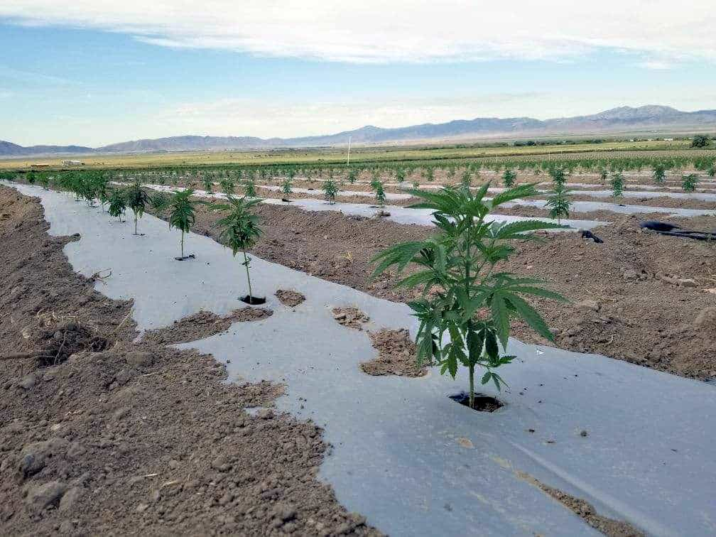 Utah Gopher Control hemp farm